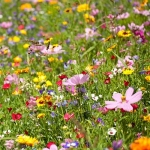 Fine Flowers Meadow Seed  Mixture. 400g.