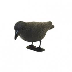 Crow Decoy. Black Plastic Crow.