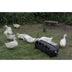Automatic Duck Drinker. 16 Litre.