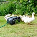 Automatic Duck & Chicken Drinker. 16 Litre.