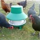 Outdoor Poultry Feeder. 6kg Blenheim. (Box of 10).