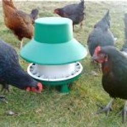 Outdoor Poultry Feeder. 6kg Blenheim. (Box of 10)