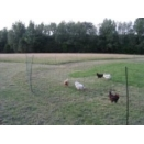 Electric Poultry Fencing / Netting. 50m x 1.1m High. Hotline. No stock until 14th April