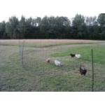 Electric Poultry Fencing / Netting. 50m x 1.1m High. Hotline. No Stock until End Feb