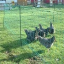 50m x 1.2m High Green Hotline Electric Poultry Netting with posts. No Stock until early July