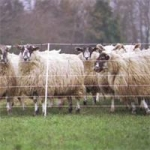 Electric Sheep Fencing