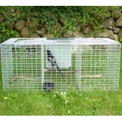 Larsen Trap - Magpie & Grey Crow Trap.