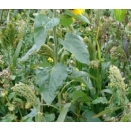 General Gamebird Mix. Cover Crop. 1 acre pack.