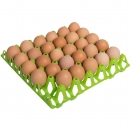 Plastic Egg Tray to hold 30 Hen Eggs.