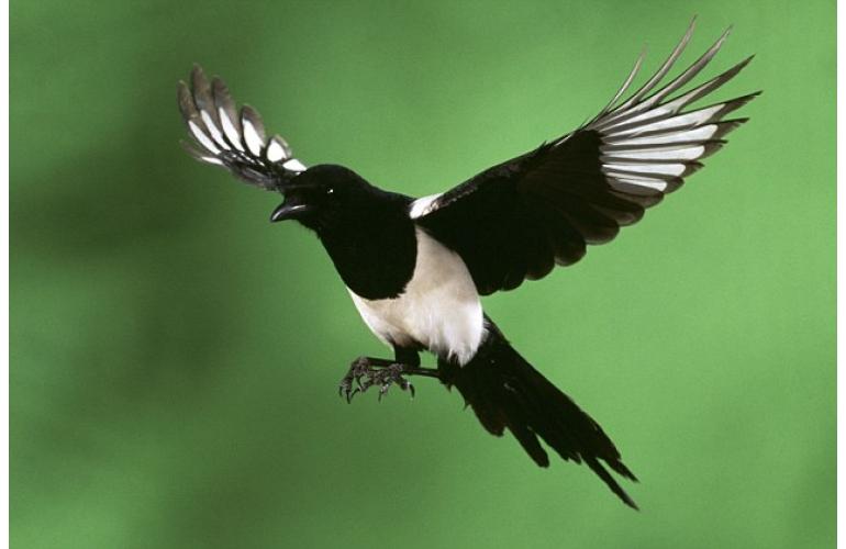 Bird Control Ireland. Winged Vermin Control Products.